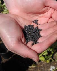 Consigli sull'alimentazione: i semi