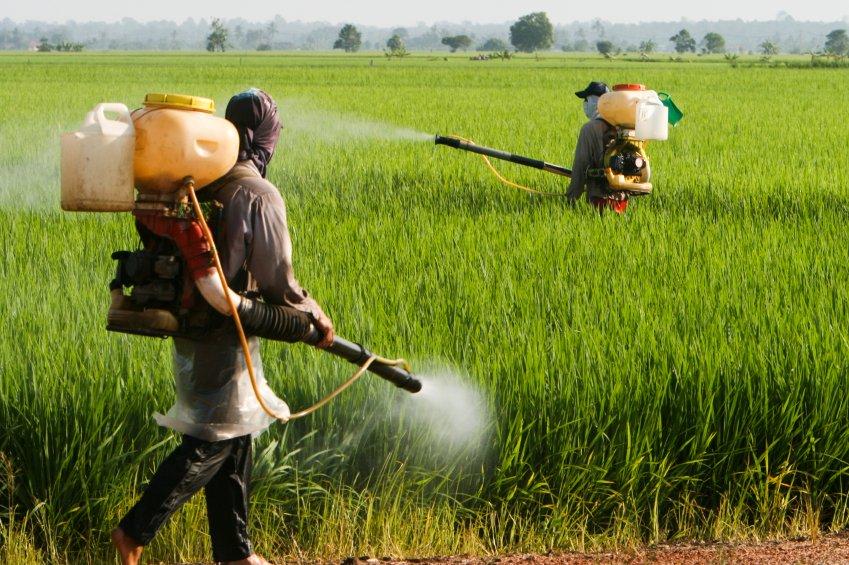 OMS e FAO: improbabile che il glifosato sia cancerogeno. Istituto Ramazzini: un disastro istituzionale e ecologico, serve una ricerca indipendente